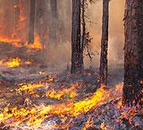 LofL fire 2013