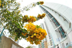 Maritme trade is blooking in Hong Kong