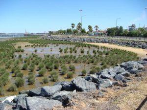 Restored salt marshes in Huelva.