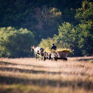 Rural life.