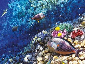 Photo marine environment