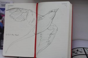 Another diary page: with white-tailed tropic bird.