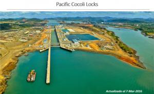 Pacific Cocoli Locks