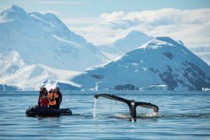Antarctica whale...